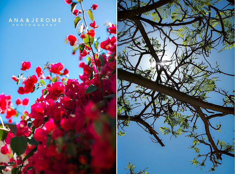 Cabo Wedding Photographers-3