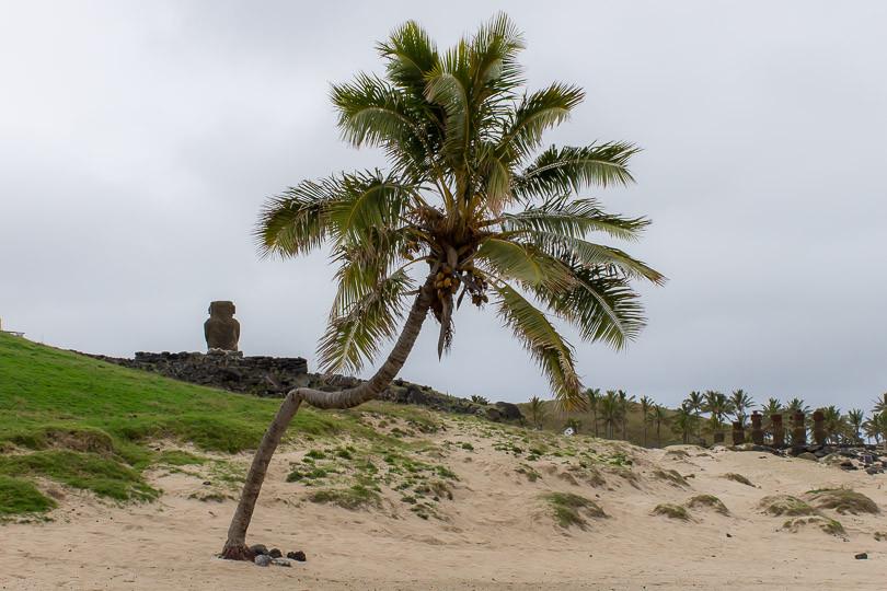 Cabo wedding photographers (Summer 2014)-123